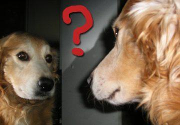 308d43768afc Νέα έρευνα δείχνει με ποιον τρόπο ο σκύλος αναγνωρίζει τον εαυτό του