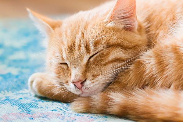 5 πράγματα για τη σχέση της γάτας με τον Μορφέα
