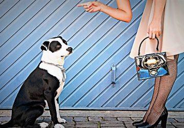 dc1fb3c8afe1 10 πράγματα που μισεί ο σκύλος μας όταν τα κάνουμε - Κουρδιστό Πορτοκάλι